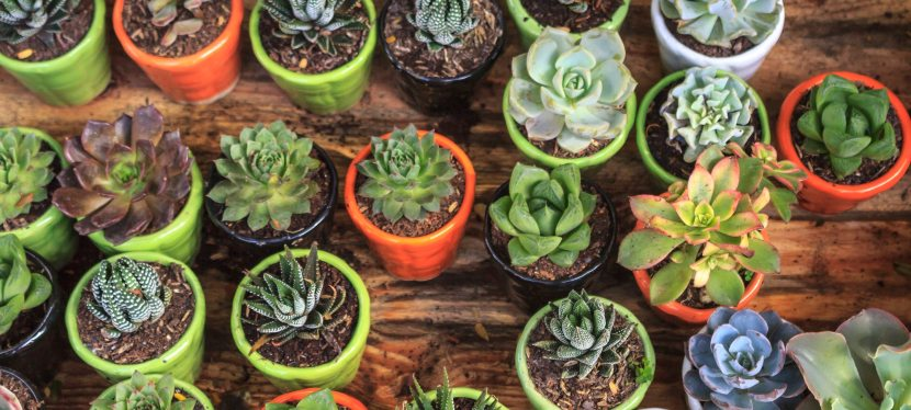 The Benefits of Indoor Plants and How to Start your Plant Journey