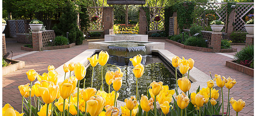Therapeutic Horticulture or Therapeutic Gardens? This year, National Horticulture Therapy week was March 14-20, 2021.