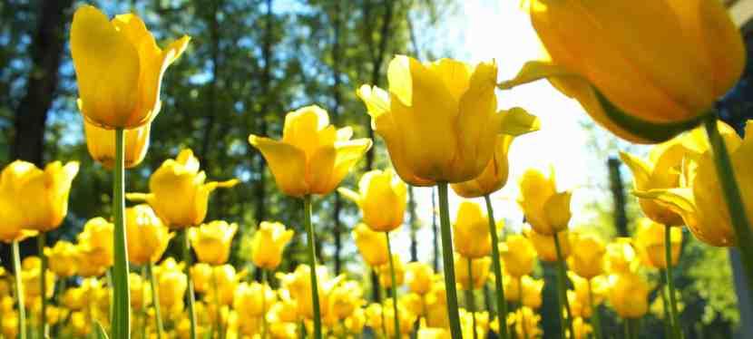 Garden Fun Spring Break Ideas forFamilies!